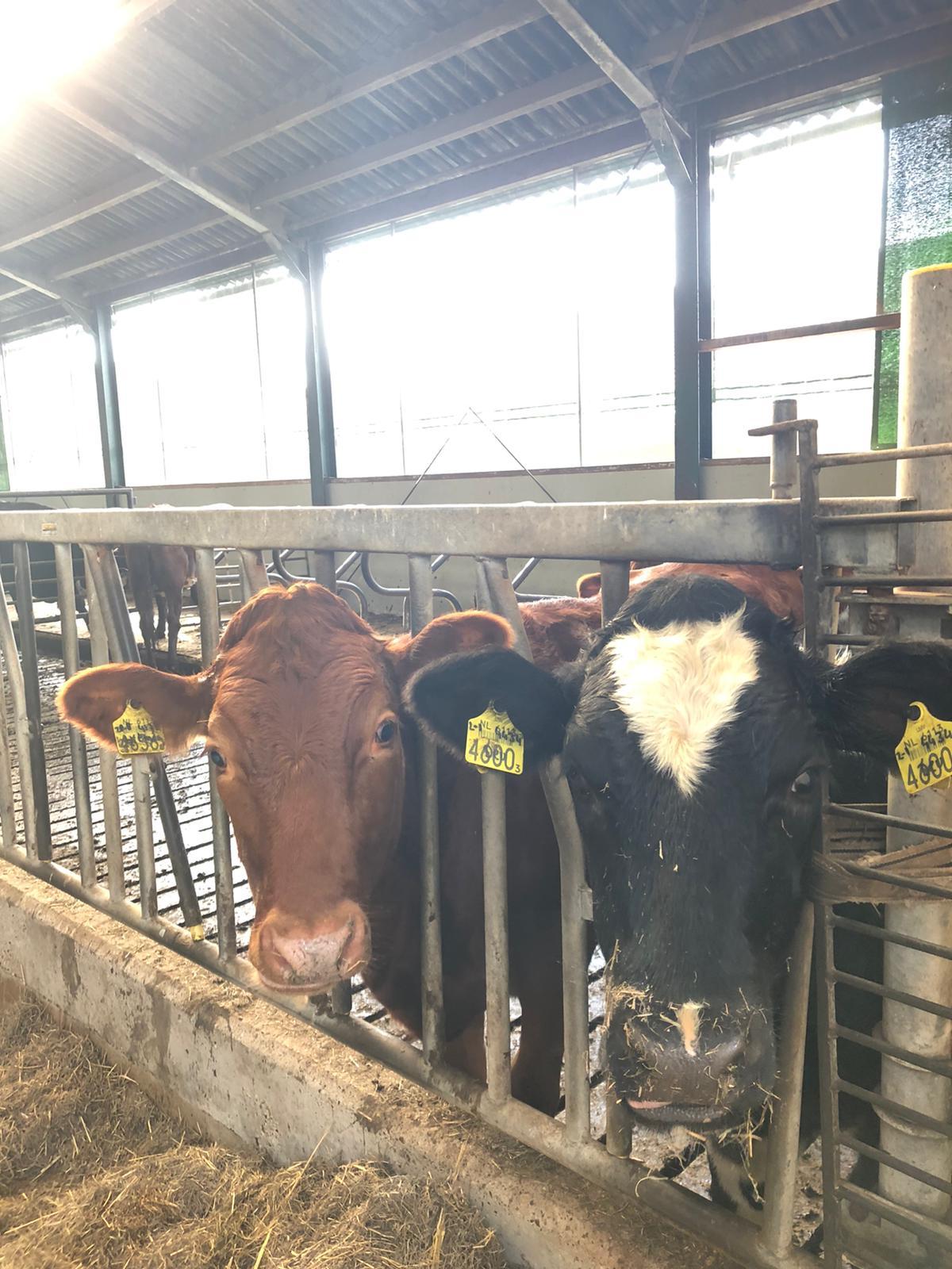 koeien Van Winden